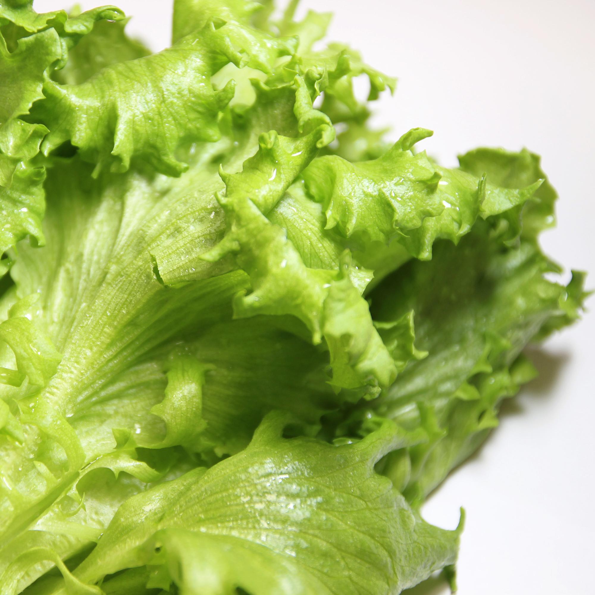Frill Lettuce